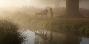 deer by a stream in the mist